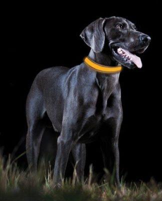Dog LED Collars