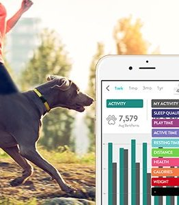 Pet Health Activity Trackers