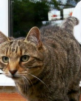 Microchip Cat Flaps Pet Doors