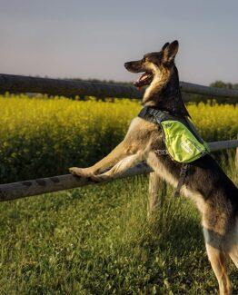 Dog Backpack Harnesses