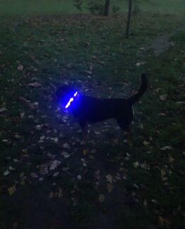 Dog LED Light Up Collars