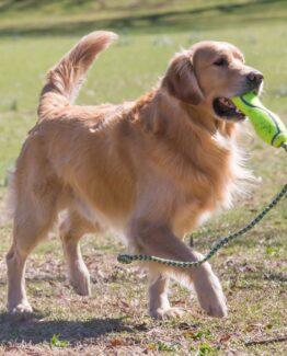 Throw Fetch Dog Toys