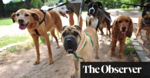 Press play for Petflix! Boom in gadgets for pandemic puppies as owners return to work The realities of ownership are dawning as the UK's lockdown eases and the dogs left at home need to be looked after!