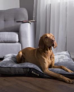 Mattress Dog Beds